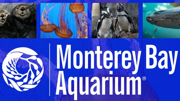 None - Monterey Bay Aquarium