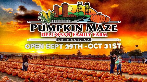 None - Dell'Osso Family Farm: Pumpkin Maze