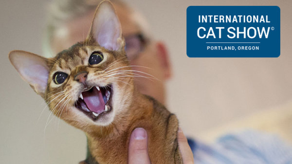 None - Win Tickets to the International Cat Show!