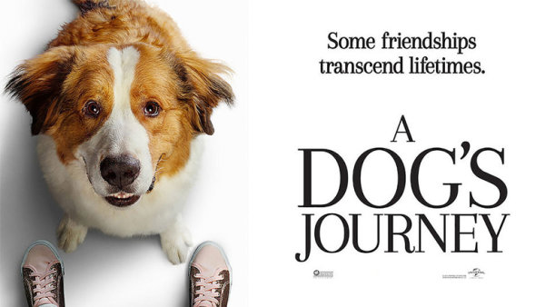 None - Win A Dog's Journey DVD