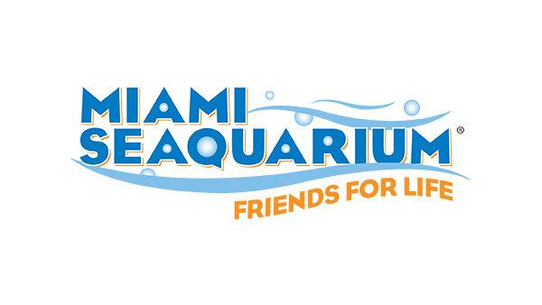 None - Swim with the Dolphins at Miami Seaquarium