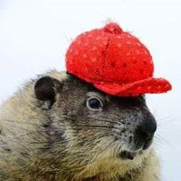 None - Groundhog Day!