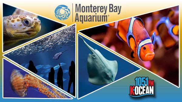 None - Win tickets to the Monterey Bay Aquarium!