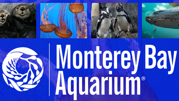 None - Monterey Bay Aquarium