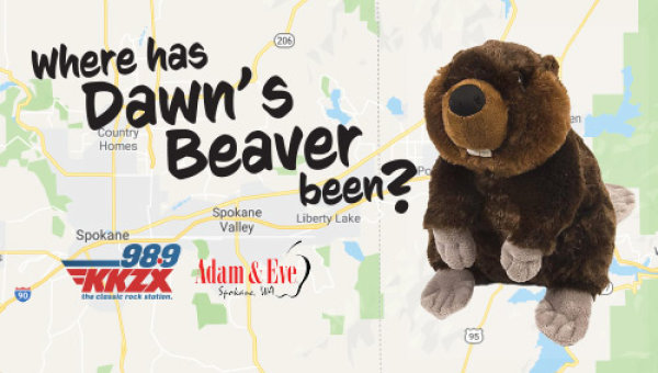 Where Has Dawn's Beaver Been?