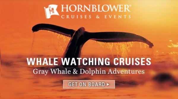 None - Win Hornblower Whale & Dolphin Watching Tour Passes
