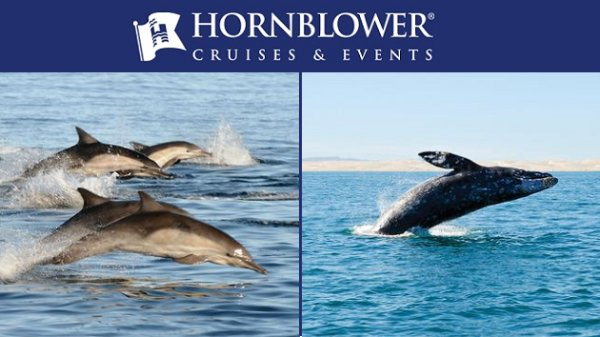 None - Win Hornblower Whale & Dolphin Watching Adventure Passes