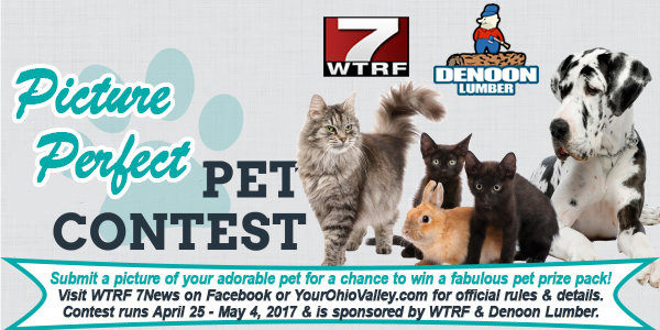 Gallery - Picture Perfect Pet Contest