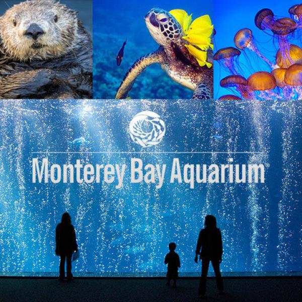 None - Aquarium Giveaway