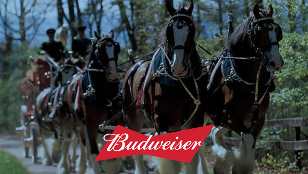 None -  Win VIP Box Seats For The Slayer Concert From The Budweiser Clydesdales