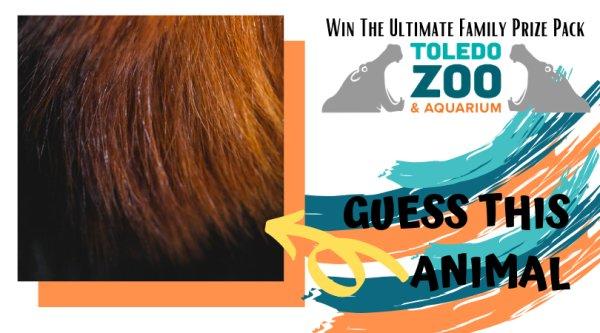 None - Toledo Zoo Photo Pop Contest!