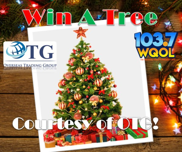 None - Win A Christmas Tree Courtesy of OTG!
