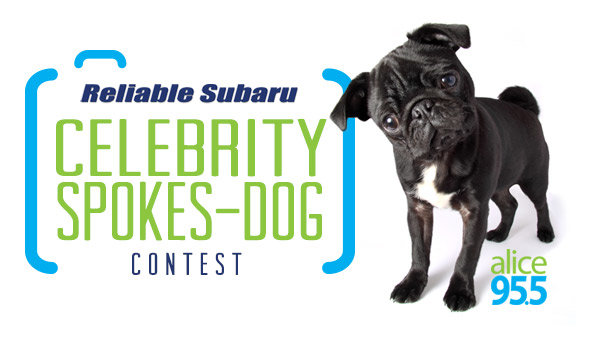 None -   Reliable Subaru's Celebrity Spokes-Dog Contest 2018