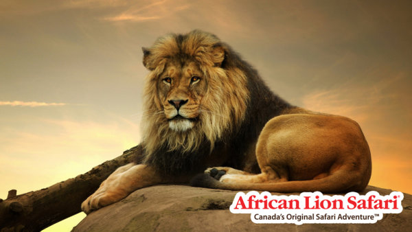 None -  Win a 4-pack of tickets to the African Lion Safari